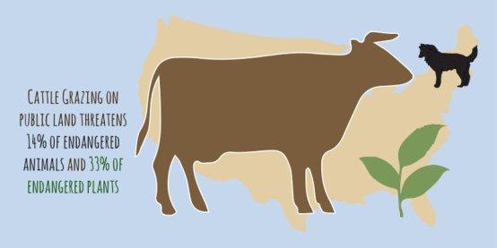 cattlegrazing_blue