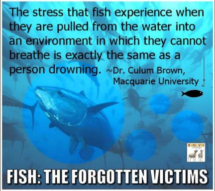 fish-stress
