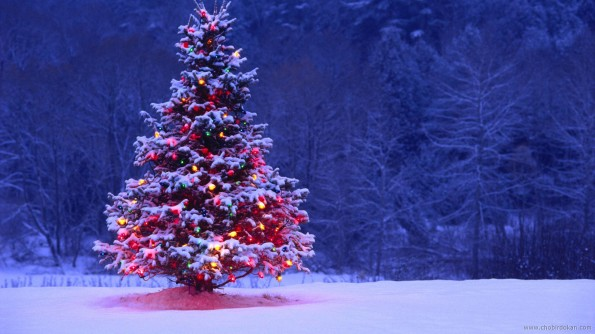 beautiful-christmas-tree-nature-scenes-wallpapers