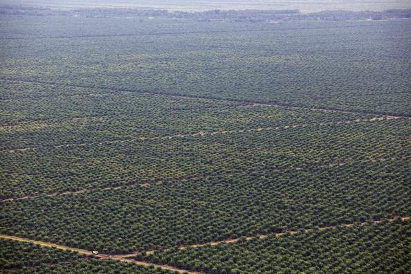 Palm-Oil-sumatra
