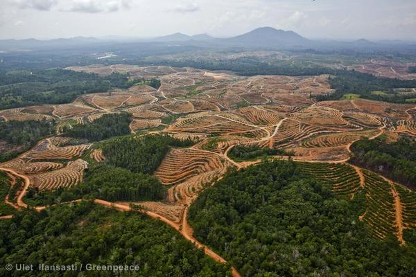 Palm_Oil_Deforestation.jpg
